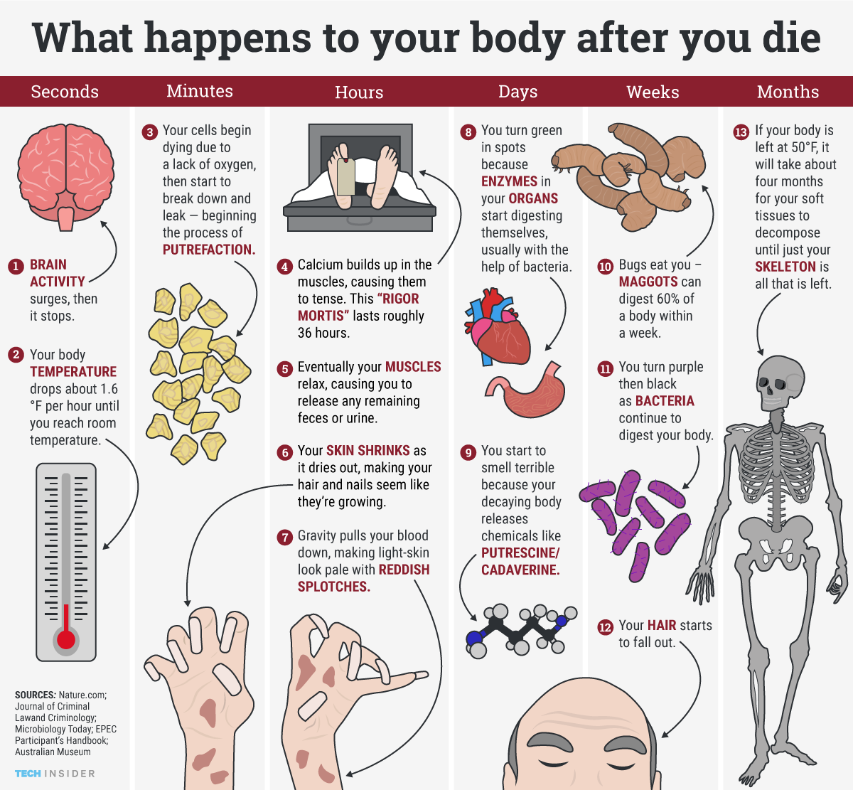ti_graphics_what-happens-to-your-body-when-you-die