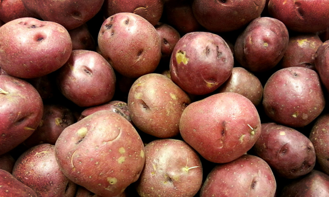 Pink Potato Slime May One Day Save Us All From Antibiotic-Resistant Bacteria